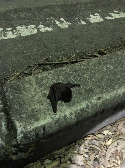 四万温泉のコウモリ