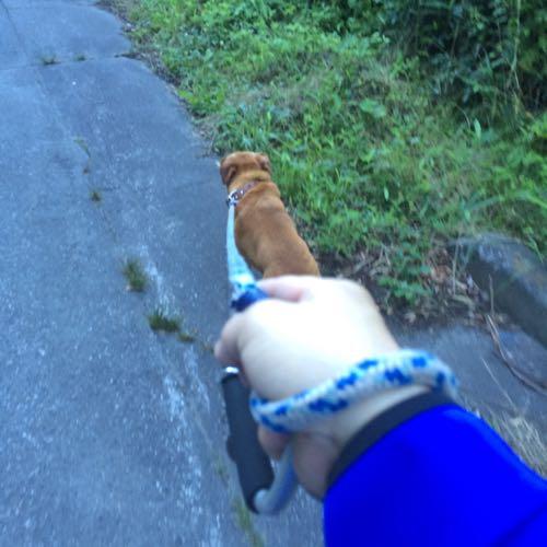 四万で犬の散歩